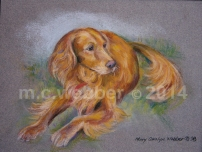 MCWEBBER Golden Retriever - Pastel