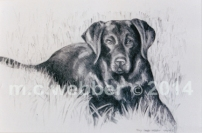 MCWEBBER Black Lab - Charcoal
