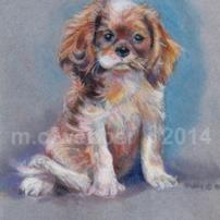 MCWEBBER Puppy - Pastel
