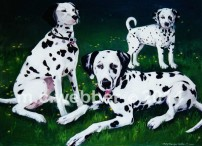 MCWEBBER 3 Dalmatians - Oil