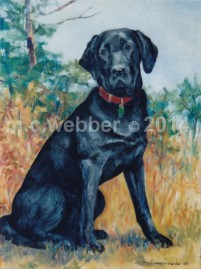 MCWEBBER black lab - Oil