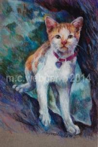 MCWEBBER Outdoor Cat - Pastel