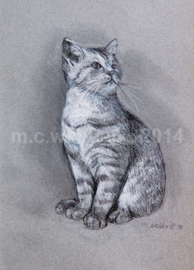 MCWEBBER gray cat - Charcoal