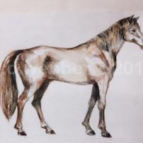 MCWEBBER Standing Horse - Watercolor