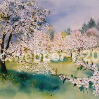 MCWEBBER La Primavera - Watercolor